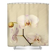 Soft And Subtle Shower Curtain