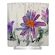 Soft Asters Shower Curtain
