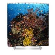 Soft Coral And Sea Fan, Fiji Shower Curtain