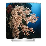 Soft Coral On The Liberty Wreck, Bali Shower Curtain