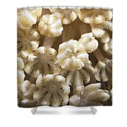 Soft Coral Polyps Feeding, Papua New Shower Curtain