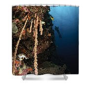 Soft Coral Reef, Indonesia Shower Curtain