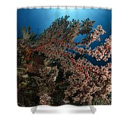Soft Coral Reef Seascape, Indonesia Shower Curtain