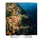 Soft Coral Seascape And Rainbow Shower Curtain