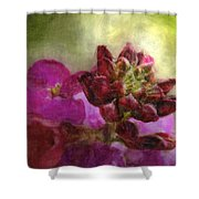 Soft Magenta Shower Curtain