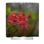 Soft Red Rhodies Shower Curtain