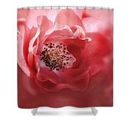 Soft Rose In Square Format Shower Curtain