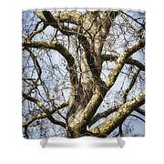Soft Winter Light Shower Curtain
