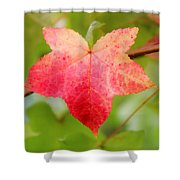 Softly Comes The Fall  2 Shower Curtain