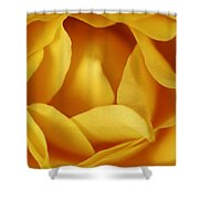 Softness In Yellows Shower Curtain