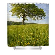 Solitary Oak Tree And Wildflowers In Shower Curtain