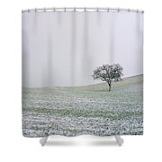 Solitary Tree In Winter Shower Curtain