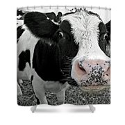Something Kinda Moo Shower Curtain