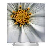 Sonata Cosmos White Shower Curtain