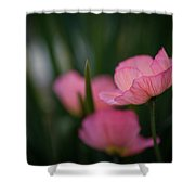 Sordid Poppies Shower Curtain