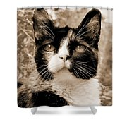Souls Great And Small 2 Shower Curtain
