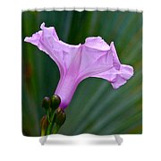 South American Morning Glory Shower Curtain