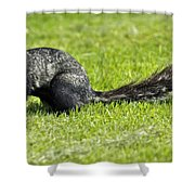 Southern Fox Squirrel Shower Curtain by Phill Doherty