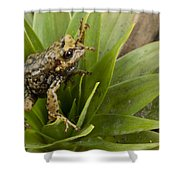 Southern Frog Newly Discovered Species Ecuador Shower Curtain