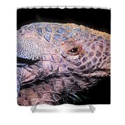 Southern Naked-tail Armadillo Shower Curtain