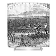 Southern Rice Field Shower Curtain