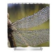 Southern Skimmer Orthetrum Brunneum Shower Curtain