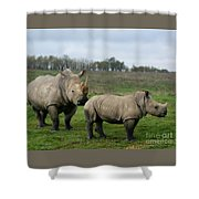Southern White Rhinos Shower Curtain