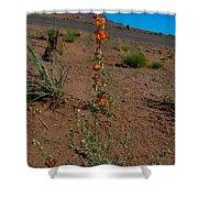 Southwest Wildflower Shower Curtain