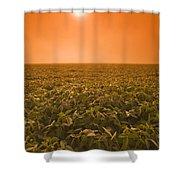Soybean Field On A Misty Morning Shower Curtain