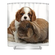 Spaniel Pup With Rabbit Shower Curtain