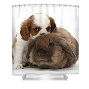 Spaniel Puppy And Rabbit Shower Curtain