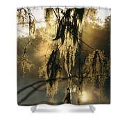Spanish Moss Hanging From A Tree Branch Shower Curtain