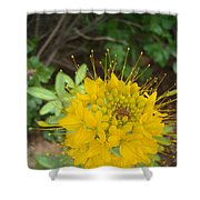 Yellow Bee Plant Sparks Shower Curtain