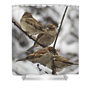 Sparows 3629 Shower Curtain