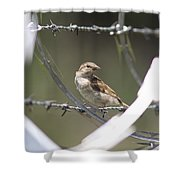 Sparrow - Protected By Razor Wire Shower Curtain