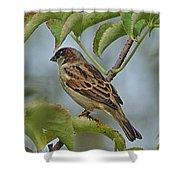 Sparrow I Shower Curtain