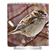 Sparrow II Shower Curtain