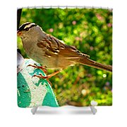 Sparrow In Morning Light  Shower Curtain