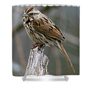 Sparrow Iv Shower Curtain