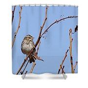 Sparrow On Blue Shower Curtain