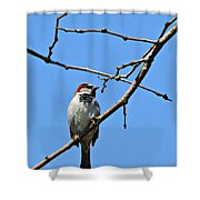 Sparrow On The Branch Shower Curtain
