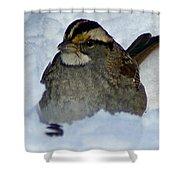Sparrow V Shower Curtain