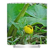 Spatterdock Wild Yellow Water Lily - Nuphar Lutea Shower Curtain
