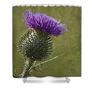 Spear Thistle With Texture Shower Curtain
