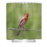 Speckled In Red Shower Curtain