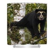Spectacled Bear Tremarctos Ornatus Cub Shower Curtain