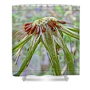 Spent Dandilion Shower Curtain