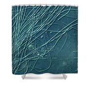 Sphaerotilus Bacteria Shower Curtain