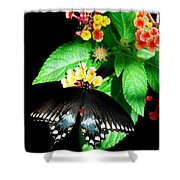 Spice Bush Swallowtail  Shower Curtain