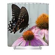 Spicebush Butterfly On Echinacea Shower Curtain